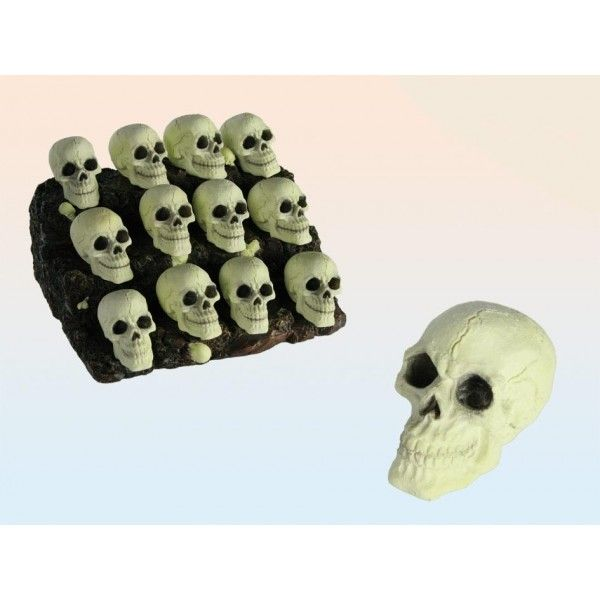Selvlysende kranier