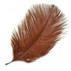Strudsefjer brun 20cm